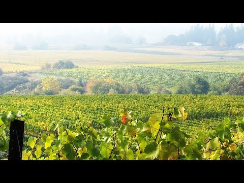 The Yamhill Valley Wine Region of Oregon: Series Sampler