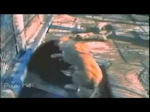 The Best Animal Fight 2