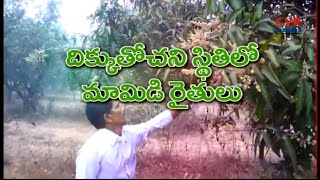 మామిడి రైతుల ఆవేదన : Special Story on Khammam District Mango Farmers Problems | Raithe Raju | CVR - CVRNEWSOFFICIAL