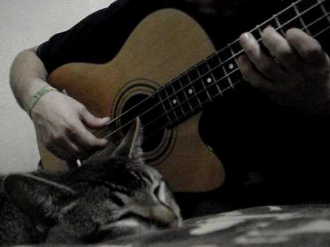 Tupac Bruch: How to make a cat fall asleep with Bach music with a bass playing Bach, bajo