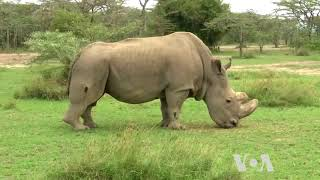 Technology Helps Save Endangered Species in Africa - VOAVIDEO