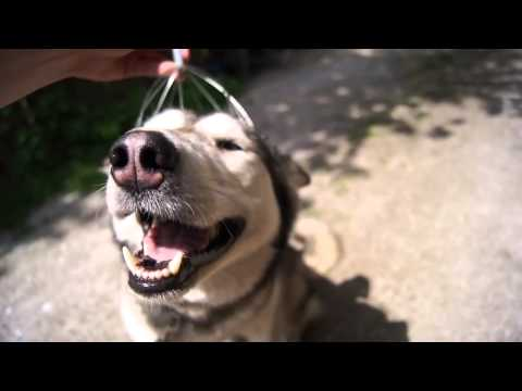Dog Head Massage - Massagem canina