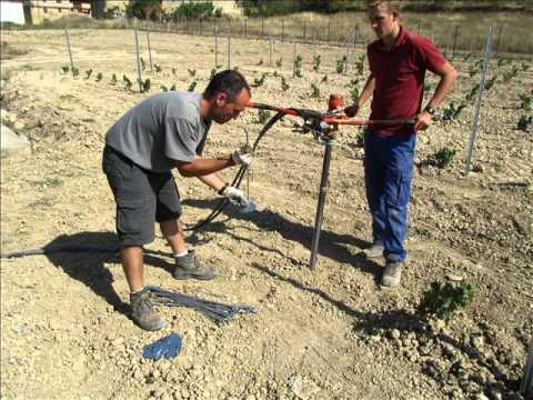 Instalación de la Viña en Espaldera - Bodegas Urbina