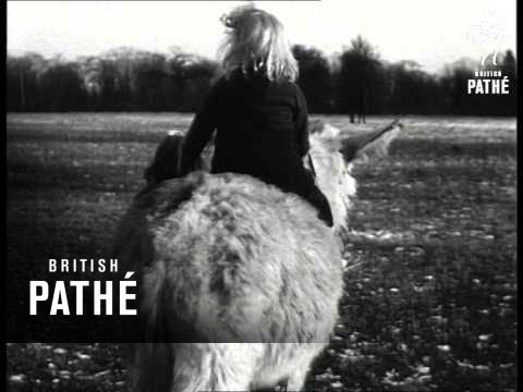 Thanks For The Donkey-Ride (1945)