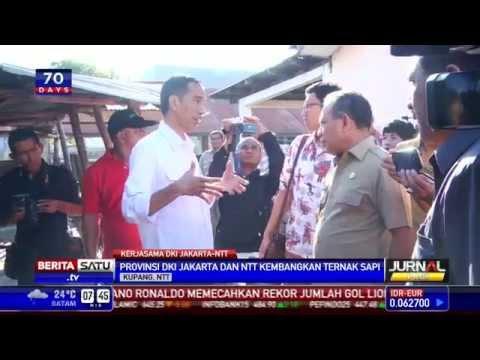 Pemprov DKI Jakarta dan NTT Kerjasama Peternakan Sapi