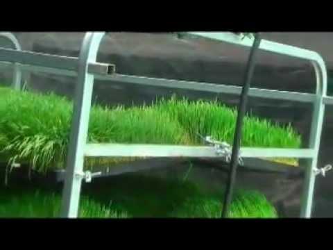 Guía para la produccion intensiva de Forraje Verde Hidroponico