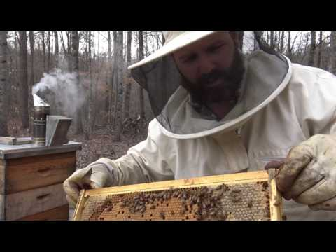 Beekeeping for dummies: A first look in the bee hive, what to look for... tips for success
