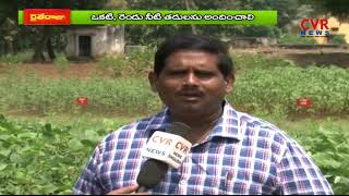 పెసర పంట సాగులో మెళకువలు : Green Gram Cultivation : Farming Techniques | Raithe Raju | CVR News - CVRNEWSOFFICIAL