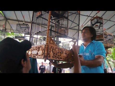 Lomba Burung Berkicau - Jati Jajar Cup Ebod Jaya