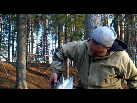 ловля щуки ружья видео