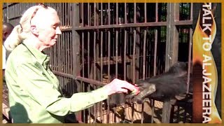 Jane Goodall: Chimpanzees, humanity and all that binds them - Talk to Al Jazeera - ALJAZEERAENGLISH