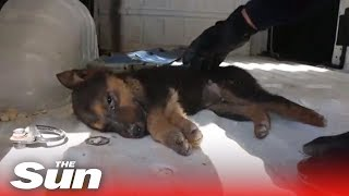 Syrian White Helmets rescue trapped puppy - THESUNNEWSPAPER