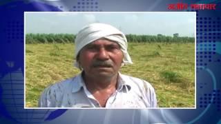 करनाल : तेज़ आंधी के साथ आई बरसात किसानों के लिए बनी आफत, सैंकड़ों एकड़ में खड़ी गन्ने व धान की फसल तबाह
