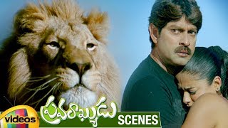 Lion Attacks Jagapathi Babu & Priyamani | Pravarakyudu Movie Scenes | Sunil | Mango Videos - MANGOVIDEOS