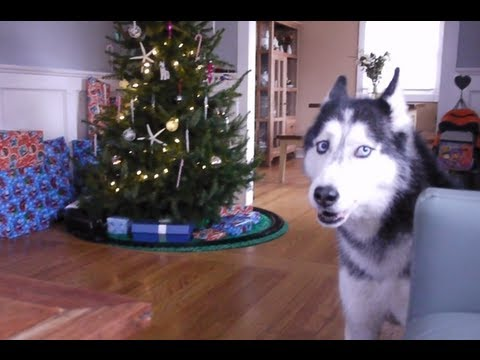 "Mishka sings ""Jingle Bells"""