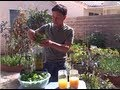 How to Make a Delicious Green Smoothie using Fresh Picked Spinach Bible Video