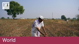 Indian farmers rethinking attitude towards GM seeds - FINANCIALTIMESVIDEOS