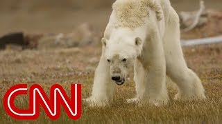 What happened to this starving polar bear? - CNN