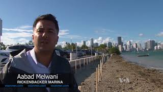 Coastal Cities Call on Nature for Protection - VOAVIDEO