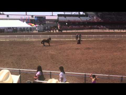Trey Calf Roping Cheyenne Frontier Days