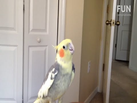 Birds singing and dancing to dubstep compilation