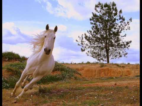 TONICO  e TINOCO *** CAVALO BRANCO  (El Caballo Blanco)