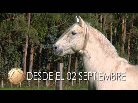 SELLO DE RAZA CABALLOS CHILENOS PROMO PELECO.mp4