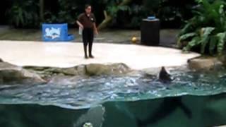 World cyclist Saurab Dahal Presentation in Singapore Zoo Dolphin So.avi view on youtube.com tube online.