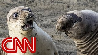 Is shocked seal the funniest wildlife photo of 2017? - CNN