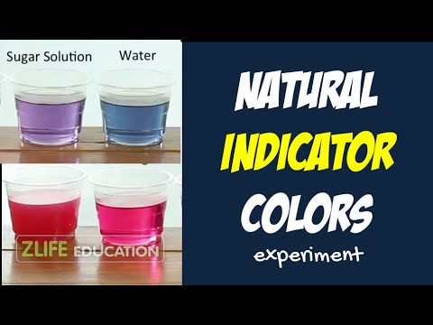 Natural Indicator Colors with Red Cabbage - Kitchen Chemistry Box Experiment for Kids