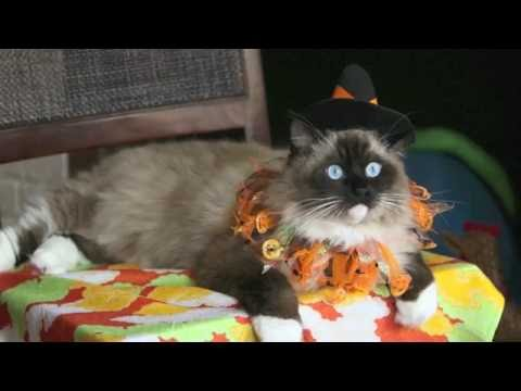 "Halloween Cat Costume ""Puss in Boots"" Ugo Chan"