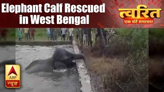 Twarit Sukh: Elephant calf rescued by forest department from a water tank in West Bengal's - ABPNEWSTV