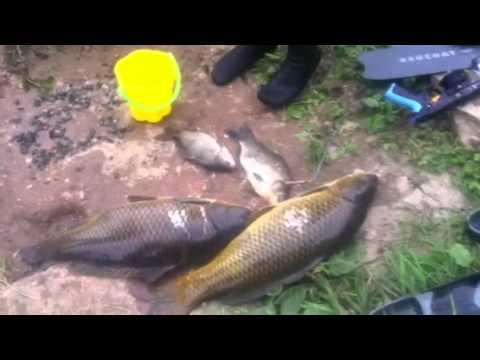 рыбалка на клязьме кв карп