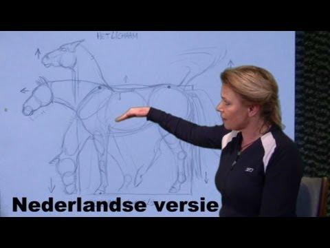 Hoe teken je een paard - het lichaam