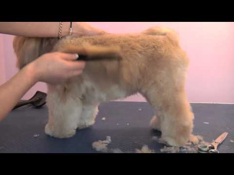 Related video for Action clips grooming salon