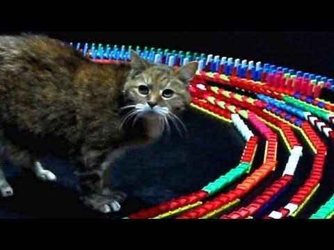 Kako zabaviti mačku