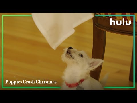 Puppies Crash Christmas • Now on Hulu - اتفرج تيوب