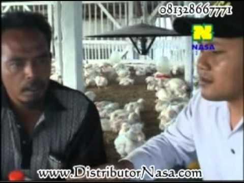 cara Beternak ayam potong