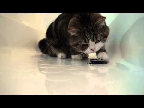 -Maru checks a bathtub plug.-