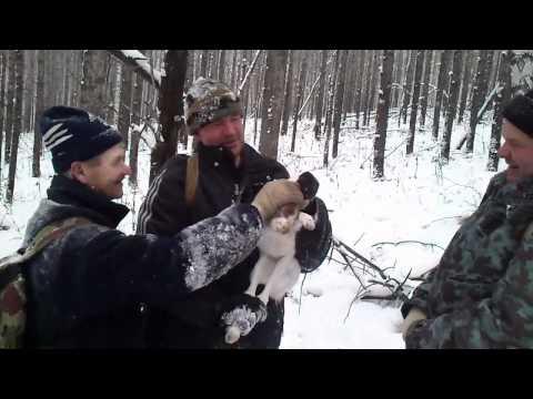 видео как я ловлю зайцев на петлю