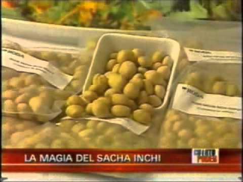 aceite de sachainchi, el Miladro de la naturaleza