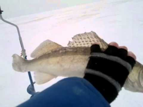рыбалка на камском устье на фидер
