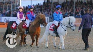Shetland Pony Grand National | Op-Docs | The New York Times - THENEWYORKTIMES