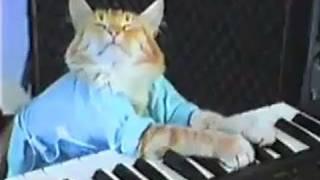 Kedi org çalarsa
