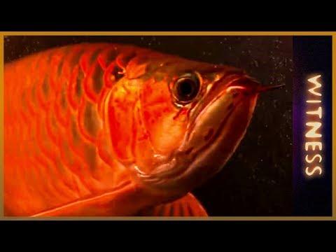 multi-million dollar fish farm