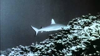40 Flipper alarmiert seine Truppe