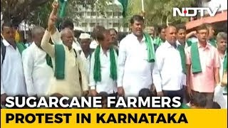 Farmers Protest In Karnataka Over Support Price Of Sugarcane - NDTV
