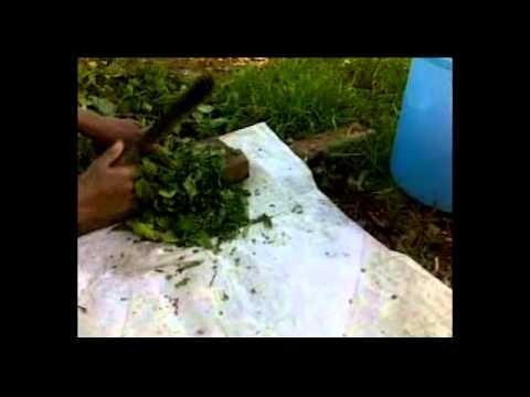 Pembuatan Pupuk Organik Cair Berbahan Kirinyu...