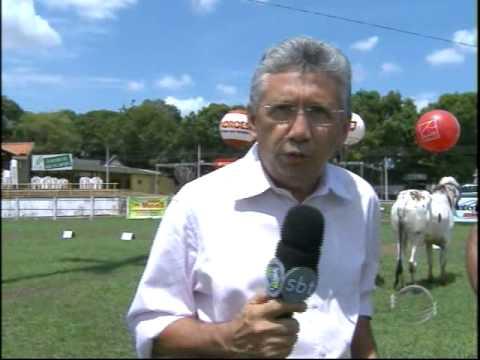 Vaca da raça Gir Leiteiro é vencedora de julgamento de raças na Expoapi