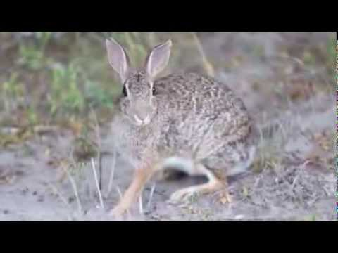Animal Yala  Rabbit eating food safari topten@world